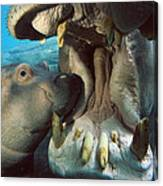 East African River Hippopotamus Canvas Print