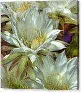 Easter Lily Cactus Bouquet Hdr Canvas Print