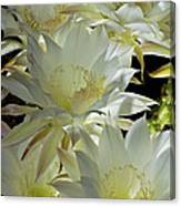 Easter Lily Cactus Bouquet Canvas Print