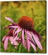 Eastern Purple Coneflower Canvas Print
