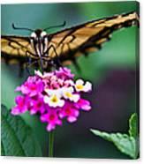 Eastern Tiger Swallowtail 7 Canvas Print