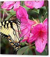 Eastern Tiger Swallowtail On Azalea Canvas Print