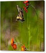 Eastern Tiger Swallowtail Profile Shot Canvas Print