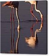 Eating Flamingos Canvas Print