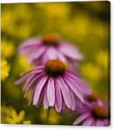 Echinacea Dreamy Canvas Print