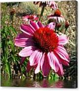 Echinacea In Water Canvas Print