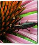Echinacea Visitor Canvas Print