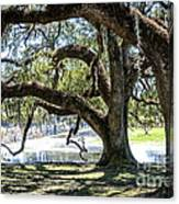 Edge Of The Green Swamp Canvas Print