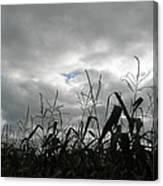 Eerie Field Canvas Print