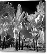 Eerie Palm Trees Canvas Print