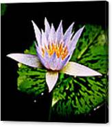 Egg Lily Canvas Print