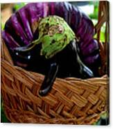 Eggplants From Sicily Canvas Print