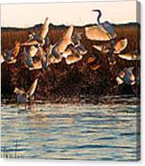 Egret And Ibis Party Canvas Print