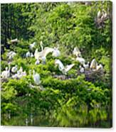 Egret Estuary Canvas Print