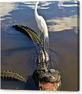Egret Hitching A Ride Canvas Print