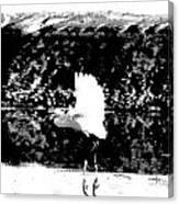 Egret In Flight V5 Canvas Print