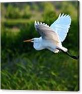 Egret Passing By  Canvas Print