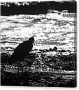Egret Silhouette  Canvas Print