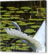 Egret Take Off Canvas Print