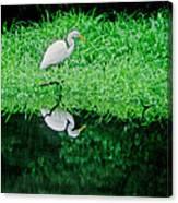 Egret Wading Canvas Print