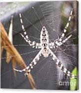 Eight Legged Friend Canvas Print