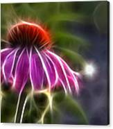 Electrified Coneflower Canvas Print
