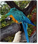 Elegant Parrot Canvas Print