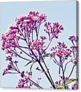 Elegant Pink Flowers. Canvas Print