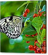 Elegant Rice Paper Butterfly On Berry Tree Canvas Print