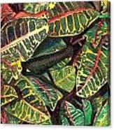 Elena's Crotons Canvas Print