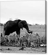 Elephant And Giraffes Canvas Print