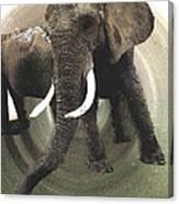 Elephant Awake Canvas Print