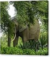 Elephant Beauty Canvas Print