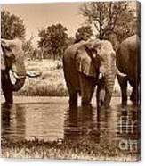 Elephant Bulls At Khwai River Canvas Print