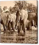 Elephant Family At Khwai Canvas Print