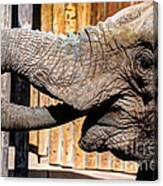 Elephant Feeding Time At The Zoo Canvas Print