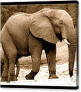 elephant of Botswana Canvas Print