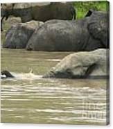 Elephant Pond Mole Park Reserve Ghana Canvas Print