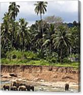 Elephants In The River Canvas Print