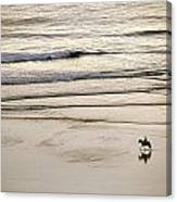 Elevated View Of A Horseback Rider Canvas Print