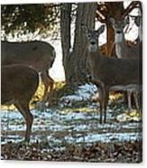 Eleven Deer Standing Canvas Print