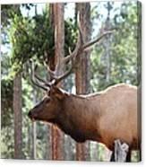 Elk Profile 2 Square Canvas Print