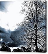 Embracing Light Canvas Print