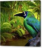 Emerald And Blue Toucan  Canvas Print
