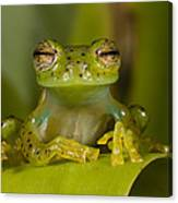 Emerald Glass Frog Centrolene Canvas Print