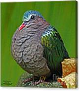 Emerald Ground Dove Canvas Print