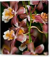 Emma's Orchid Canvas Print