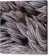Emu Feathers Canvas Print