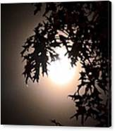 Enchanted By Moonlight Canvas Print