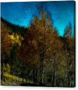 Enchanted Evening In The Forest Canvas Print
